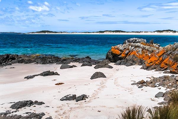 Orange lichen on the rocks at Little Musselroe Bay, Tasmania