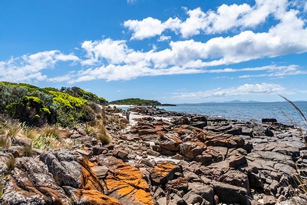 Orange lichen on basalt rocks at Little Musselroe Bay, Tasmania