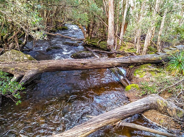 Old fallen-log bridge across the Cephissus Creek, Tasmania