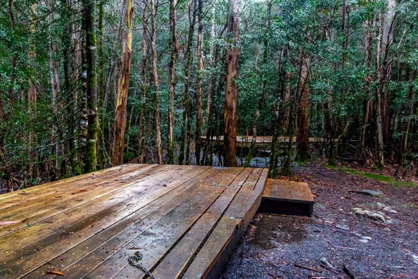 Timber platform tent sites sit under the rain forest canopy