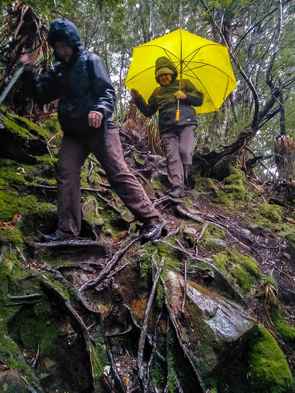 Christine and Graham balancing on slippery tree roots on their ascent to the Labyrinth in the Cradle Mountain Lake St Clair National Park