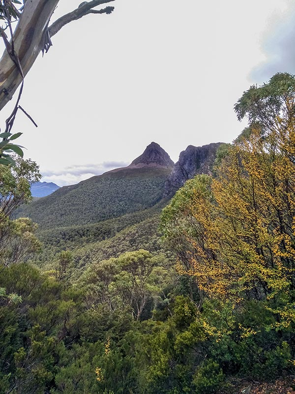 View of Mount Gould from The Labyrinth in the Cradle Mountain-Lake St Clair National Park