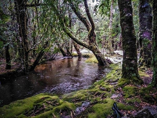 Cephissus Creek in flood near the Pine Valley Hut