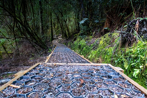 High-tech plastic material used on a section of trail in the rainforest on the Frenchmans Cap walk