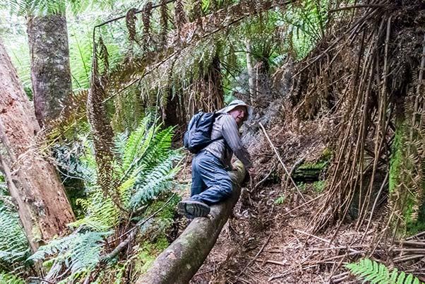 Graham climbing over a fallen tree on the Mount Scott walk