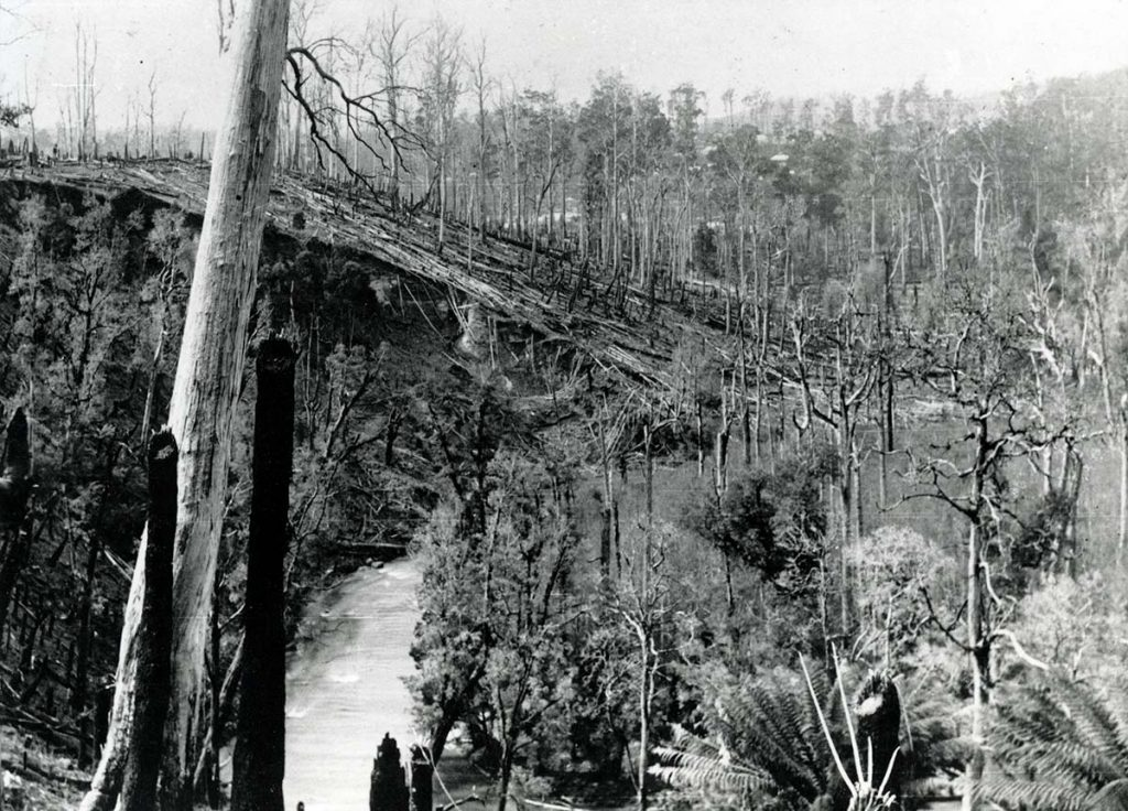 Old black and white photo of the Ringarooma River near what is now Tin Dragon Cottages.
