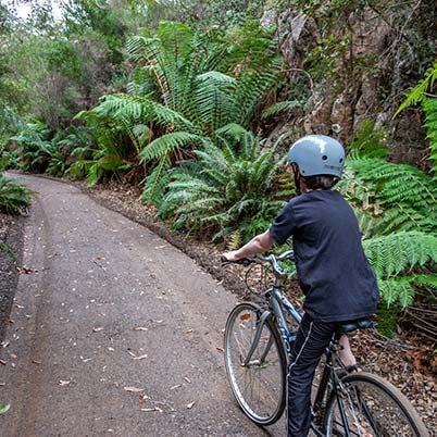 A young boy on a bicycle riding on the North East rail trail through a rock cutting lines with man ferns.