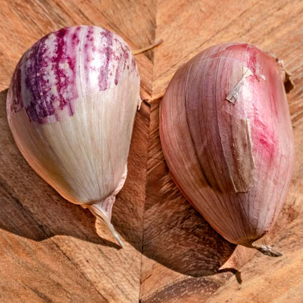 Two unpeeled garlic bulbs on a wooden cutting board. The bulb on the left is fresh and the bulb on the right has been frozen