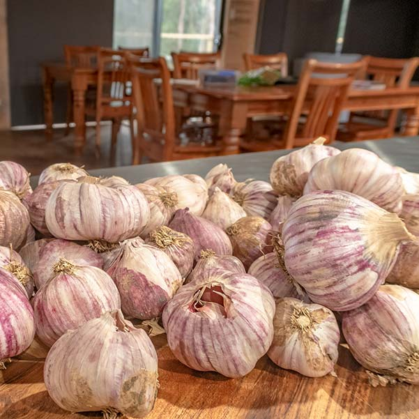 Here is a collection of garlic bulbs sitting on a wooden cutting board.