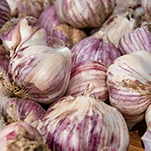 A close-up of purple-striped garlic bulbs.