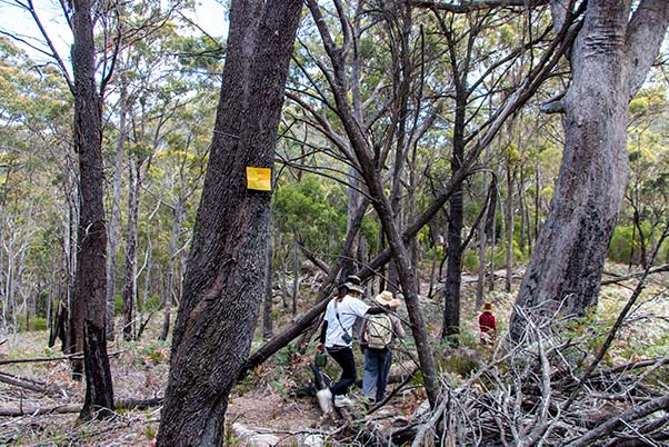 There is a bright rectangular yellow marker on a tree near the people walking on the track to Cube rock.