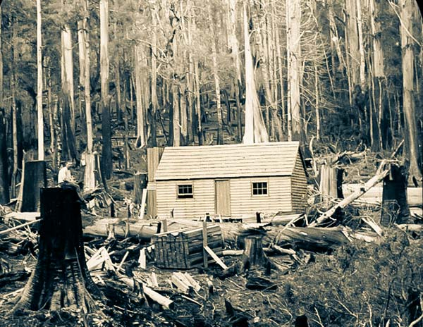 A simple timber cottage in a newly cleared site. In the foreground is a massive tree stump with a man sitting on it. Photo taken around 1900