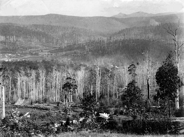 A view out to Scottsdale in Tasmania taken during the Tin Mining era around 1890.